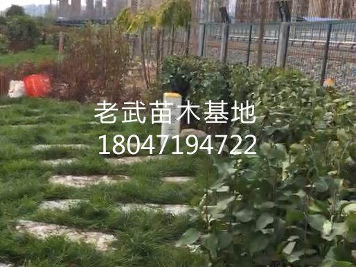 梦之城平台注册_北垣街街道两侧绿化工程