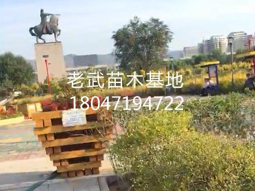 梦之城登入_丝周之路公园花草苗木整体绿化